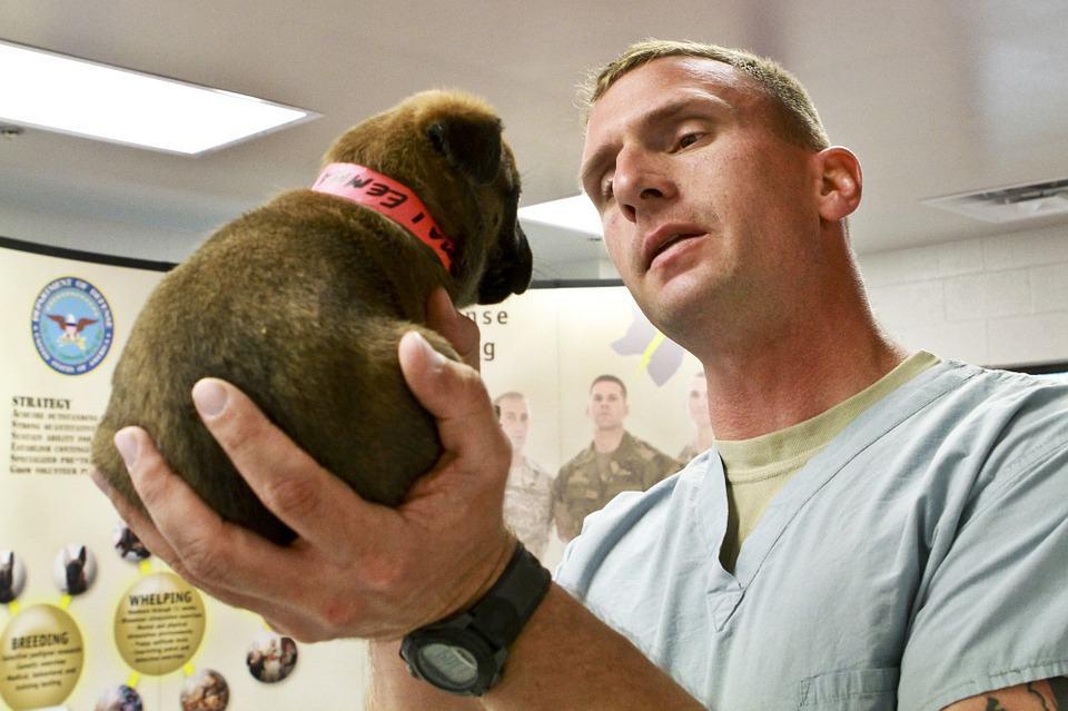 Vet and puppy Veterinarian Job Description